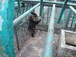 de la ZOO Bârlad în paradisul urșilor de la Zărnești